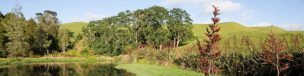 Picture of trees on farm. Click here to visit the DairyNZ - Essential Freshwater webpage