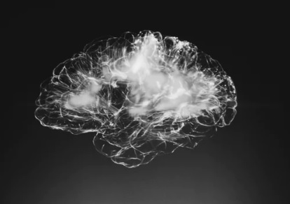 Photograph of a brain