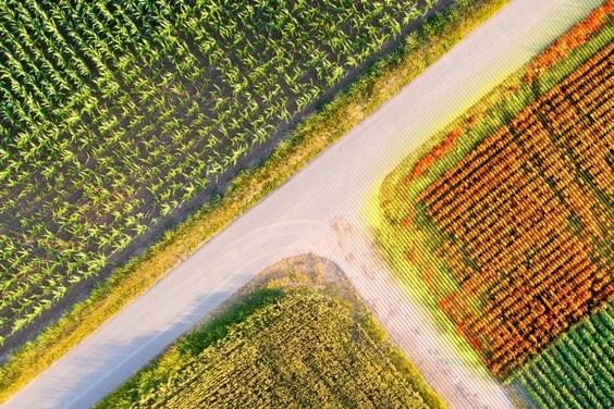 small plot trials in field