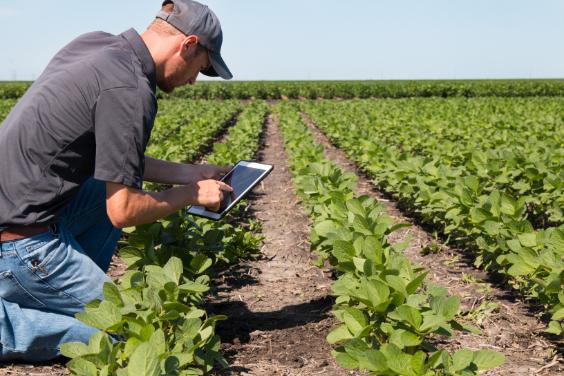 Man using an iPad in a paddock