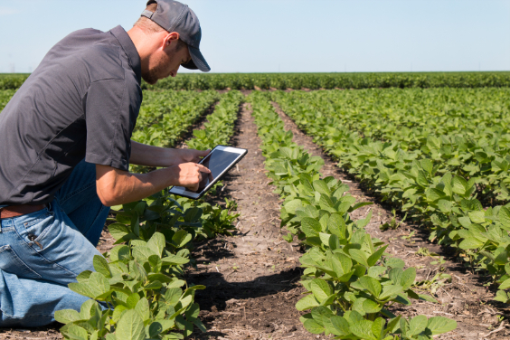 Man in field with iPad